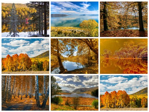 مجموعه 50 عکس جنگل پاییزی 2560x1600
